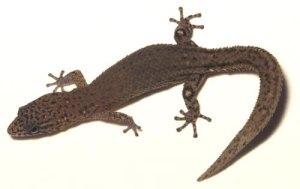lizard_big