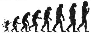 human chart
