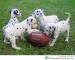 football dogs