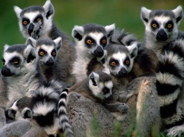 Can anyone tell me why no college sports teams are called the Lemurs?