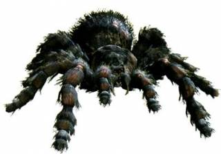 Maldoror 5 7 tarantula