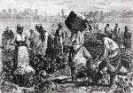 Plantation slaves