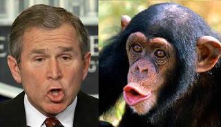 George W Bush chimp