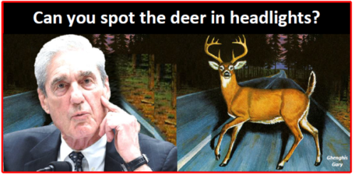 Mueller deer in the headlights